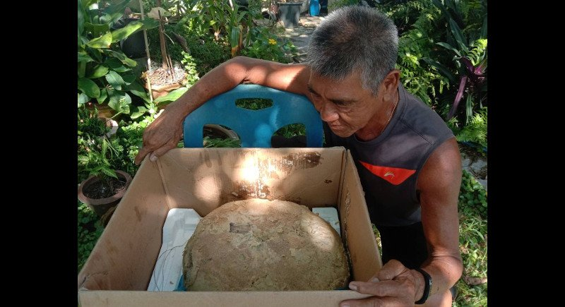 Mr Yongyuth and the lump that might be worth B30 million. Photo: Eakkapop Thongtub